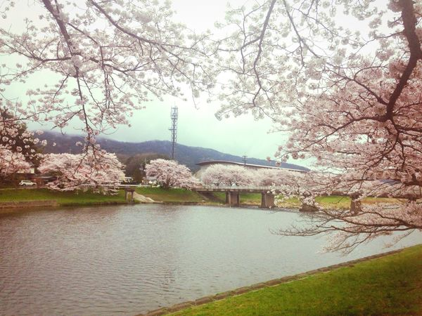 Cerryblossom Riverview Japanesevillege Japan Spring Sakura Beautiful Mitoya Shimane,japan
