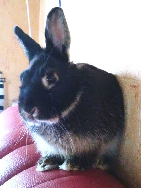 Omer Rabbit