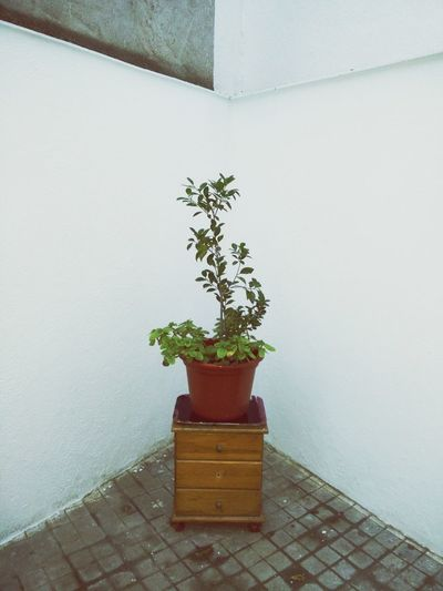 Potted Plant Growth Plant Flower Pot Green Color Indoors Freshness Depressed Depressive Depression Sadness Loneliness Natural Geometry Natural Underground Claustrophobia  Claustrophobic Botanic Garden Decor DIY Homemade Two Trees Connected Plants Mix Planta Interior Mimimalism Reflexing