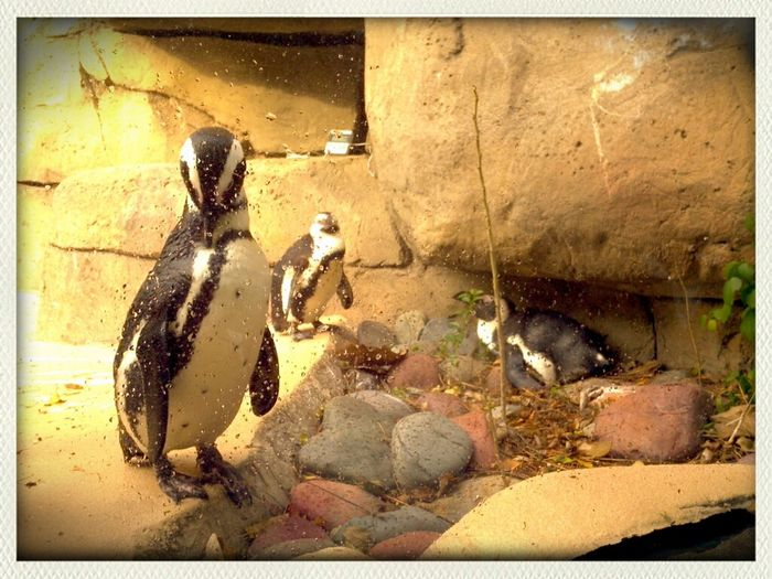 Animals Dallas Pinguins