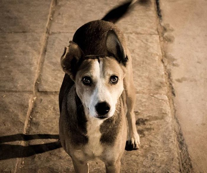 Dog Innocence Innocent_eyes Street Unexplained Instapic Lovefordogs Dogislove Lightroom5 Picoftheday