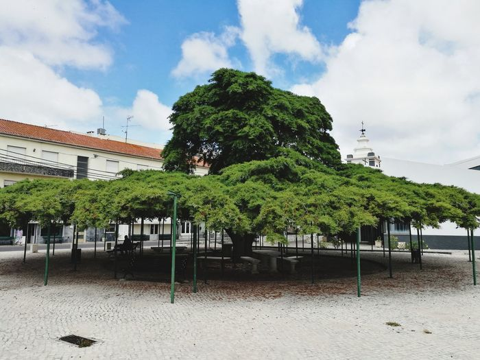 Tree over