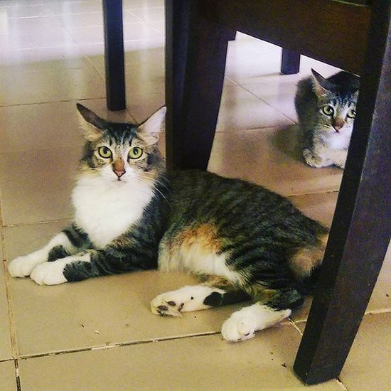 Then...there is this Cat .. Kucing Catoftheday Housecats Kucingmalaysia