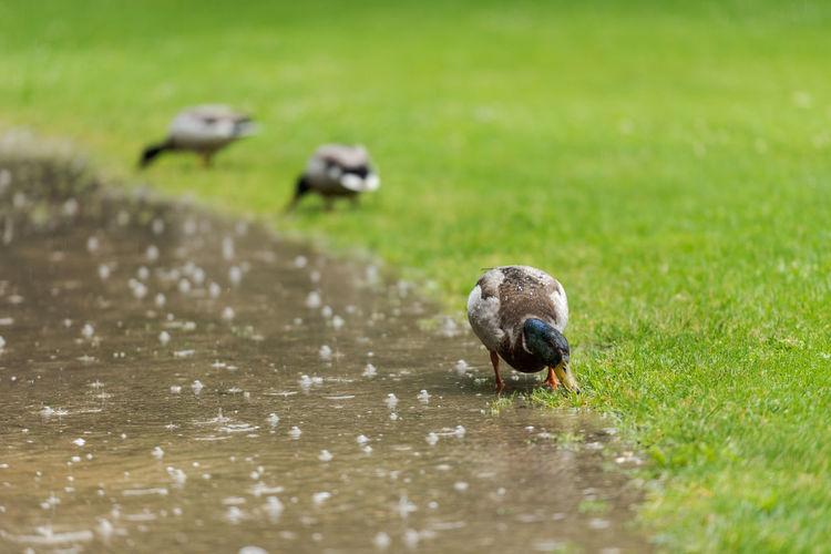 Bird in a grass