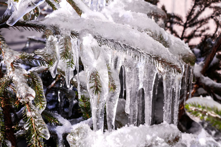 Close-up of icicles on tree