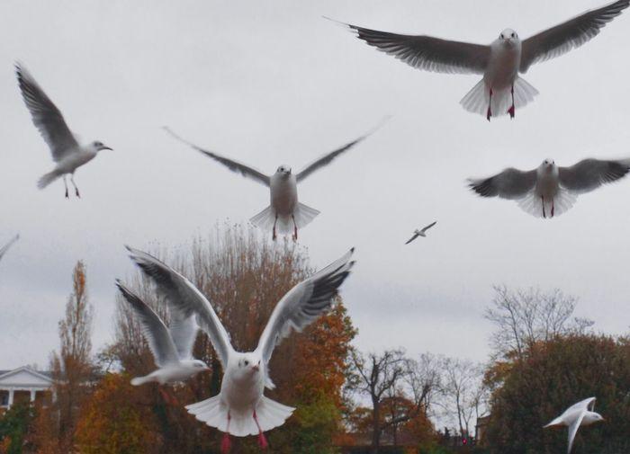 Birds Flock Seagulls