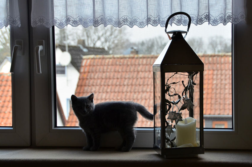 Love Shadows & Lights Animal Animal Themes Blue Blue Grey British Shorthair Cat Close-up Day Dog Domestic Animals Domestic Cat Feline Indoors  Kitten Mammal Nature No People One Animal Pets Shadow Sweet W-holly Window