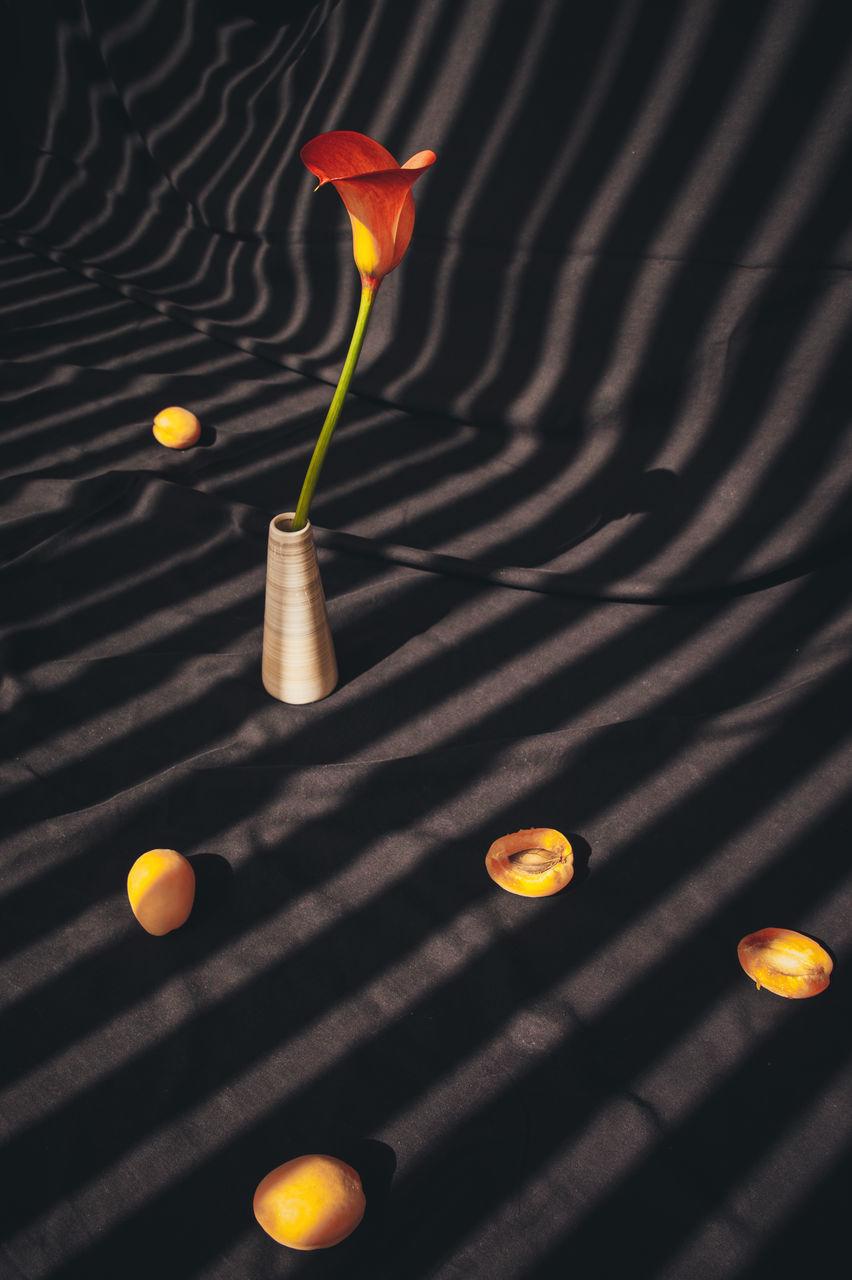 CLOSE-UP OF ILLUMINATED ORANGE FLOWER ON FLOOR