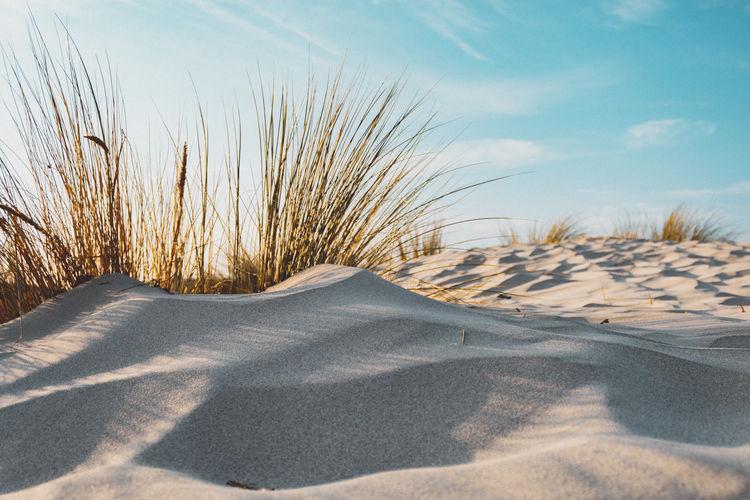 Dunes near the