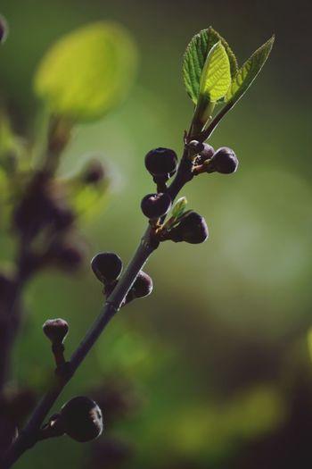 Nature Newlife💛 Greenery