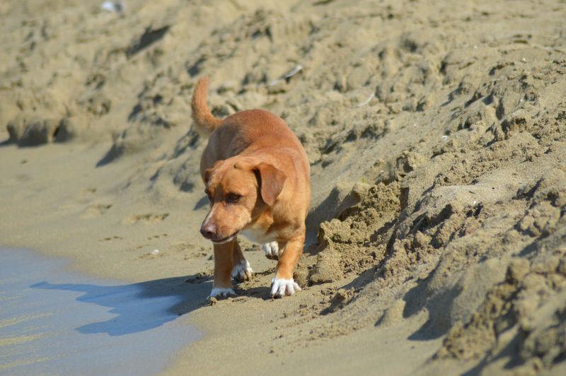 Dog On Sand At Beach
