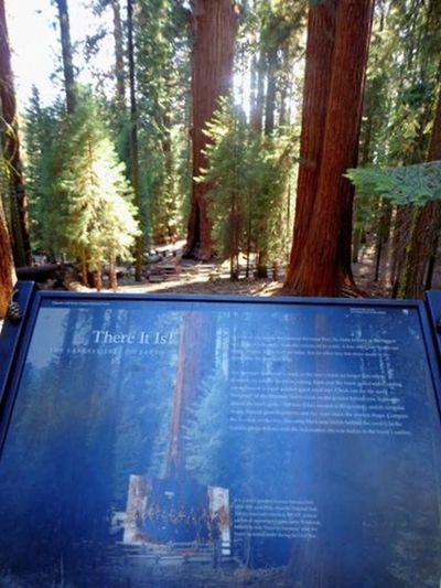 Seeing The Sights General Sherman Biggest Tree In The World Braiagasm XD