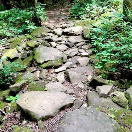 When the rocky path is actually a bridge Rocks Bridge Hope
