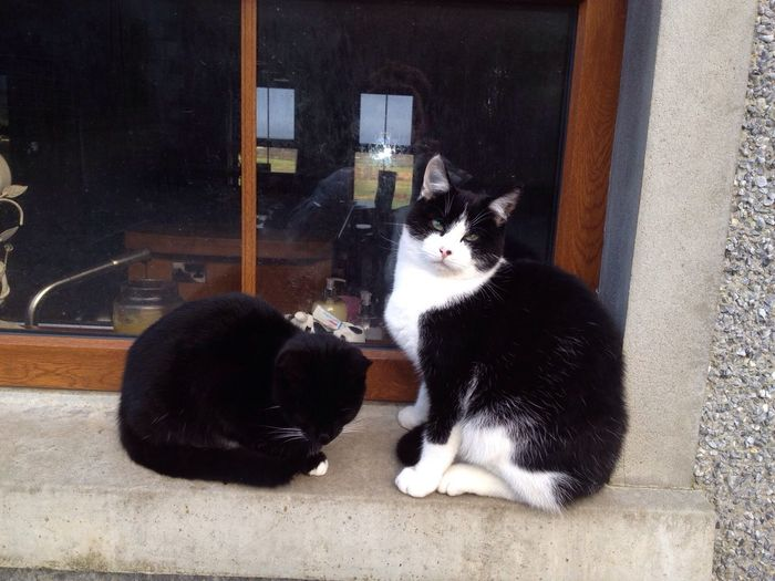 Newcastle Upon Tyne We Man And We Woman :) Cute Cats