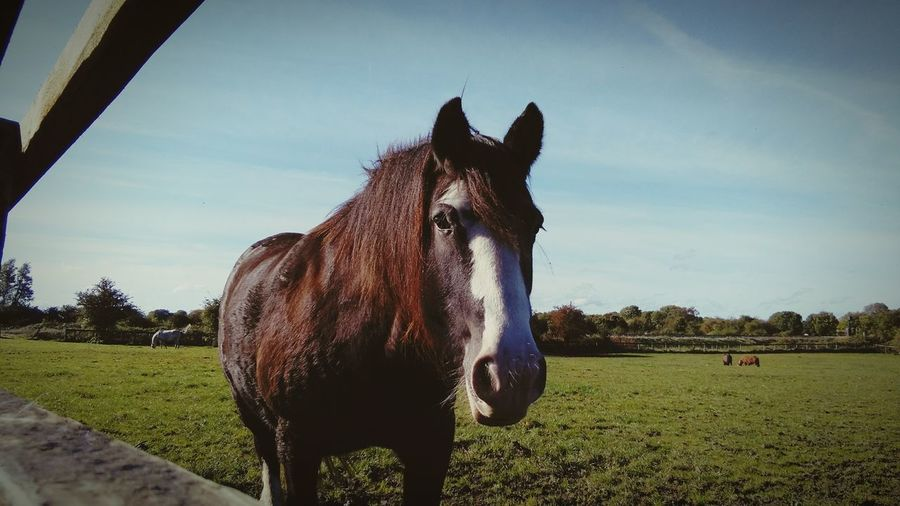Portrait of horse standing on field against sky at barn