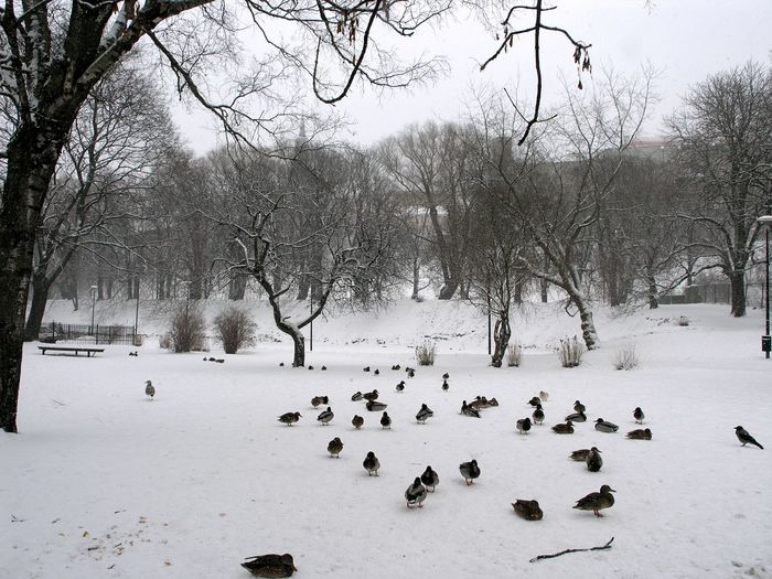 View of birds on snow covered landscape