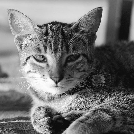 Cat Catlovers Gato😽 Gato Gatos 😍 Gata