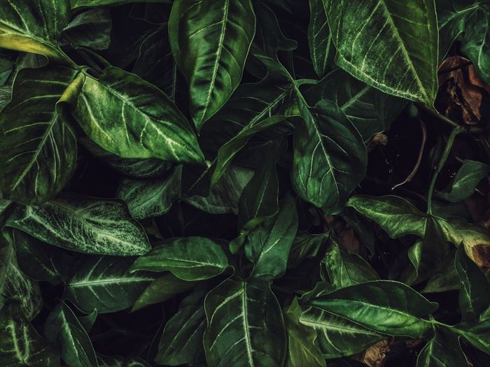 Leaves Backgrounds Beauty In Nature Close-up Day Freshness Full Frame Green Green Color Growing Growth High Angle View Leaf Leaf Vein Leaves Lush Foliage Natural Pattern Nature Outdoors Plant Showcase March