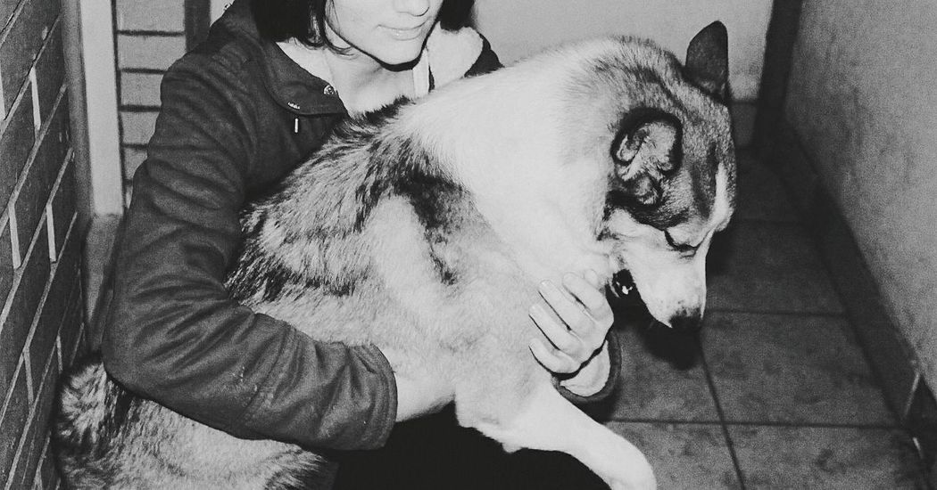 Good dog ❤