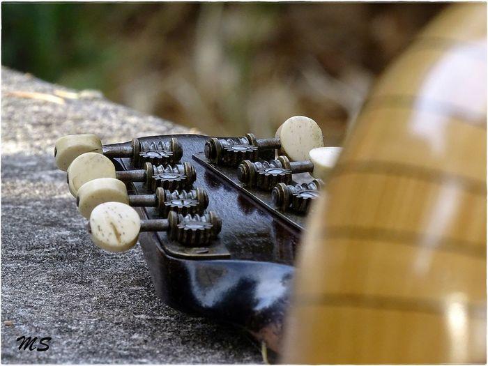 Musique Instrument Instrumental Mandolin Napolitain