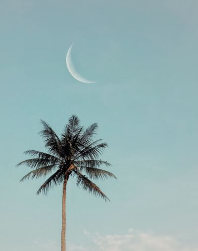 Palm tree & moon Beauty In Nature Bokeh Photography EyeEm Selects EyeEm Gallery Colors Eye4photography  EyeEm Tree Moonlight Moon Sky Low Angle View Tree Plant Nature Growth Beauty In Nature Moon No People Cloud - Sky Scenics - Nature Palm Tree Outdoors Tranquility Copy Space Silhouette Tropical Climate Day Tranquil Scene The Minimalist - 2019 EyeEm Awards