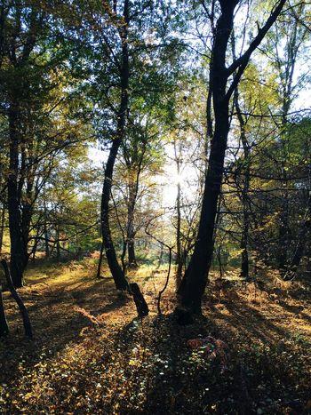 Forest Waldspaziergang Nature Wahnerheide Wald Im Wald Baum Bäume Sonne Landscape Zeit Poesie