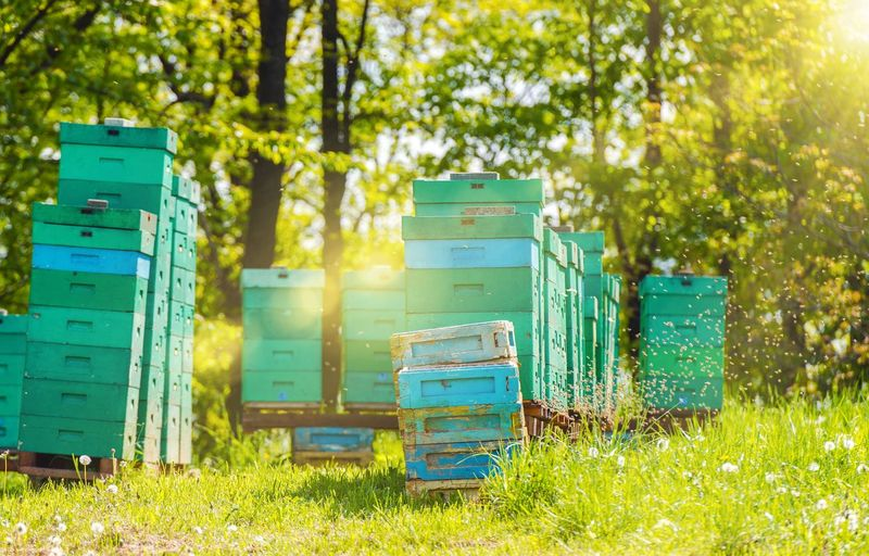 Beehives by trees in summer