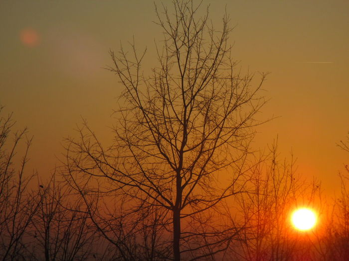 Best part of the day :D Sunset Magicsky Taking Photos Orange Sky Autumn🍁🍁🍁 EyeEm Nature Lover Beautiful Nature Trees And Sky Beautiful Day Eyemnaturelover Amazing_captures Yellow Sky