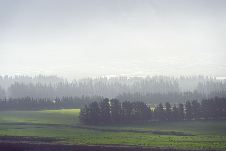 Agriculture Beautiful Beauty In Nature Blue Day Green Haze Landscape Lines Nature Nature New Zealand No People NZ Outdoor Scenics Sun Sunlight Tree Trees Wilberforce River Windbreaker