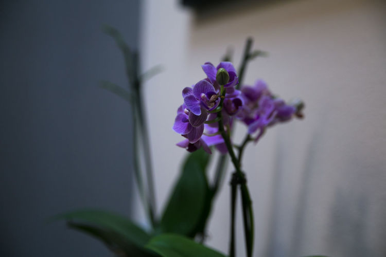 Morning moments Flower Flowers Home Home Interior Home Is Where The Art Is Home Sweet Home Homesweethome House Morning Morning Light Morning Rituals Orchidea Purple Rituals Violet