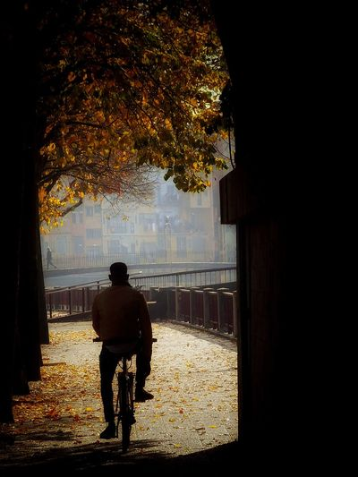Rear View Bicycle Two People Cycling Riding People Silhouette Men Full Length Lifestyles Adult Tree Real People Outdoors Day Only Men Autumn Leaves Autumn🍁🍁🍁 Autumn Autumn Colors TheVille Street Photography Transportation Mode Of Transport Capturemoment