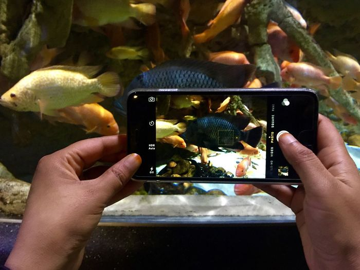 Cropped Hands Photographing Fishes Swimming In Tank