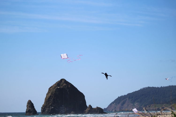 Bird and kite flying over sea against clear blue sky