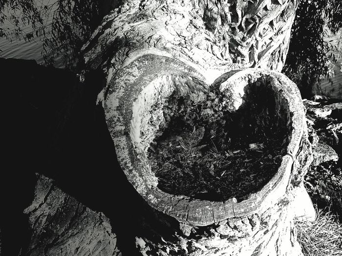 Baw Naturesbesuty Found My Heart In A Tree Quit Close To The Sea