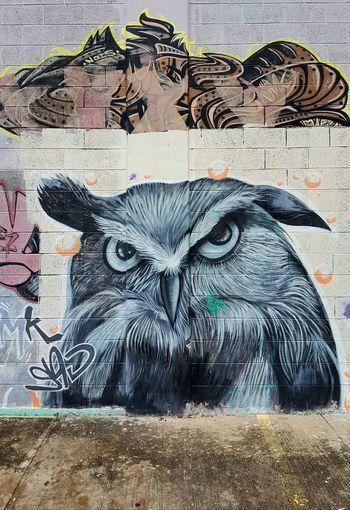 Mr. Owl Rincon, Puerto Rico RinconPR Owl Graffiti