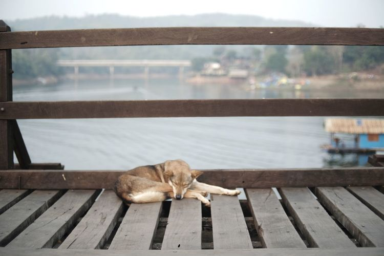 Dog sleeping on pier