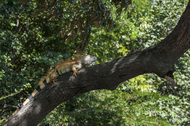 View of a cat resting on tree