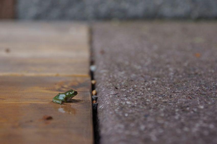 お天気雨のカエル Non-urban Scene Frog Green Low Angle View PENTAX K-70