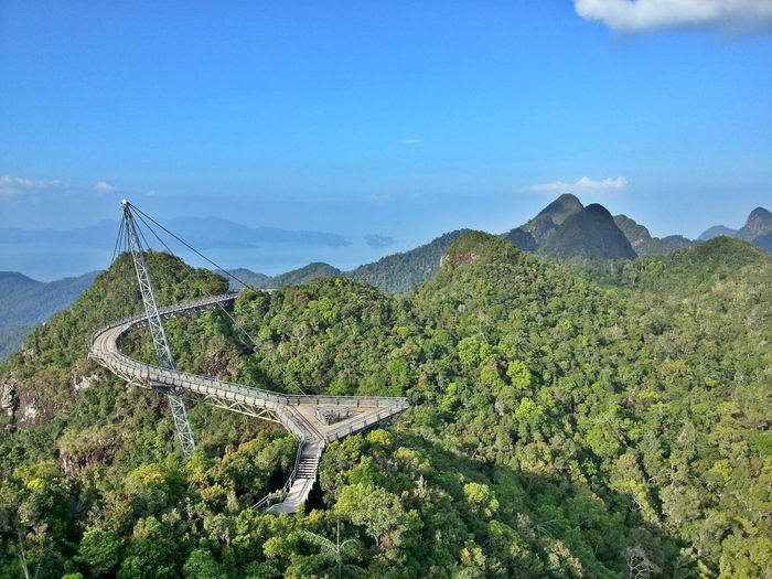 High angle view of footbridge along lush foliage