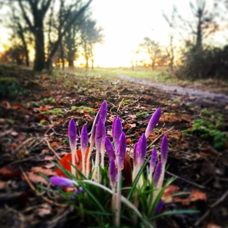 Spring must be coming...🌷 Relaxing Spring Flowers Sunrise Countryside Sun Nature Nature Photography Nature_collection Nature On Your Doorstep Aberdeen Scotland Landscape Photooftheday Photography Showcase: February Nature's Diversities
