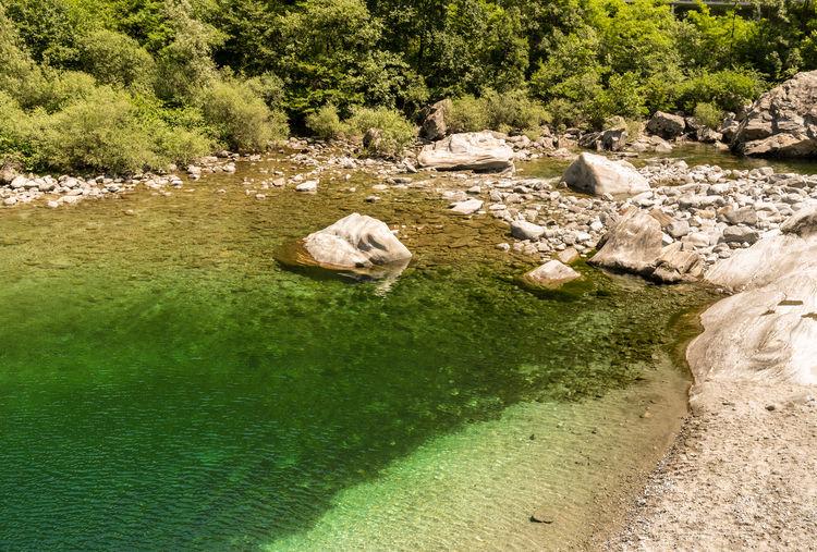 Rocks in stream amidst trees