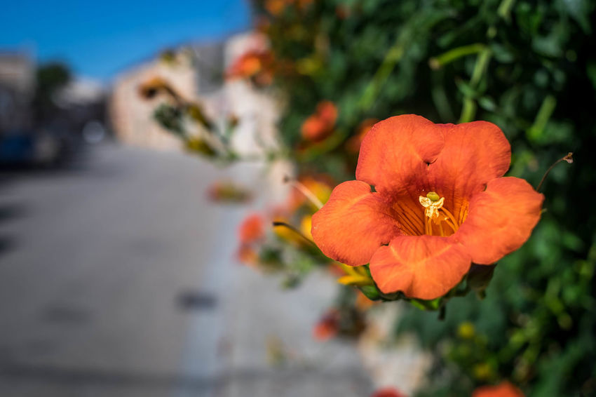 Flower Plant Nature Beauty In Nature Outdoors Close-up Day No People Flower Head Freshness Sky Mallorcaphotographer Mallorcaisland Manuelkiese Santanyi Mallorca (Spain)