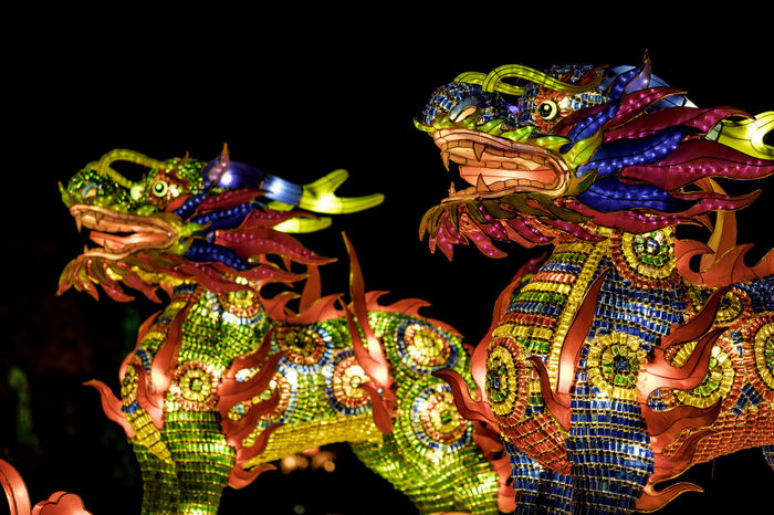 China Light Festival Milwaukee Animal Representation Arts Culture And Entertainment Black Background Carnival - Celebration Event Celebration Chinese Dragon Costume Cultures Dancing Dragon Focus On Foreground Illuminated Leisure Activity Multi Colored Night Outdoors Performance Performing Arts Event Real People Tradition Traditional Dancing Traditional Festival
