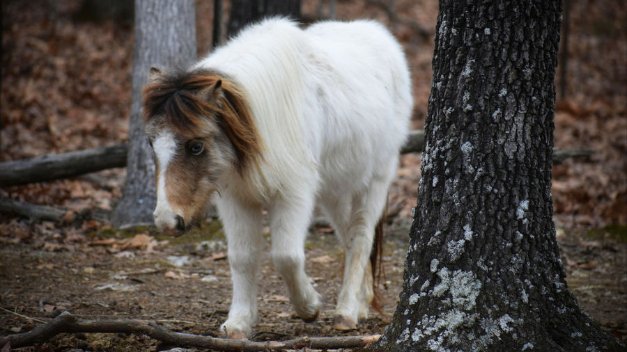 Horse standing on tree trunk