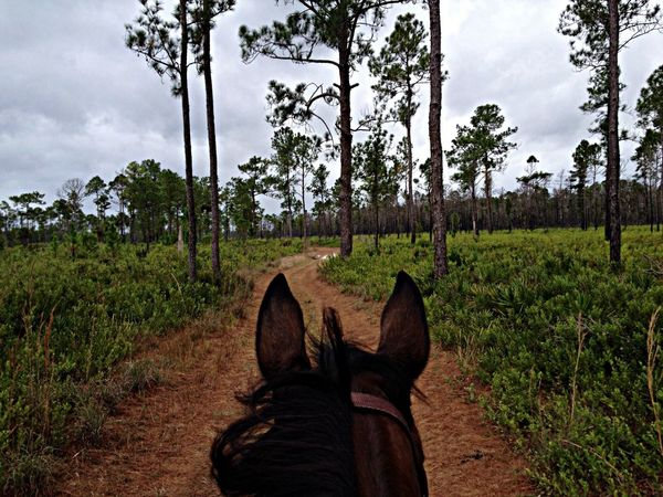 One of my all-time favorites! Horse Trail Ride
