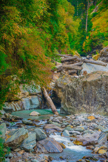 Beautiful Colourful Nature Himachal Pradesh Incredible India Malana Magic Valley Monochrome Monument Nature Peaceful River Travel Photography Traveling Traveling India Tree Wanderer Wanderlust