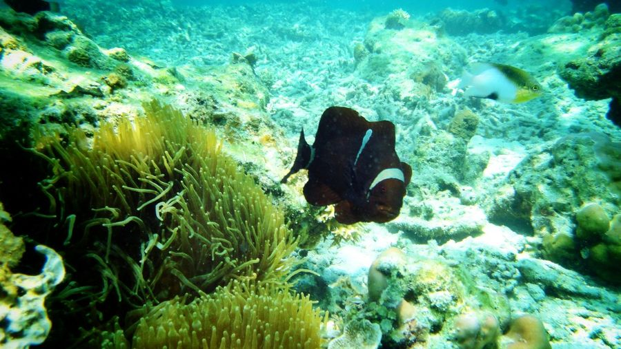 I Luv ??? Fish Underwaterphotography at Shimizu Beach, El Nido, Philippines Fish Eye Sea Life EyeEm Nature Lover