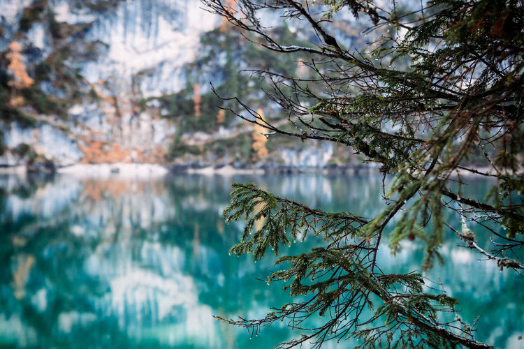 Reflection of tree in lake during winter