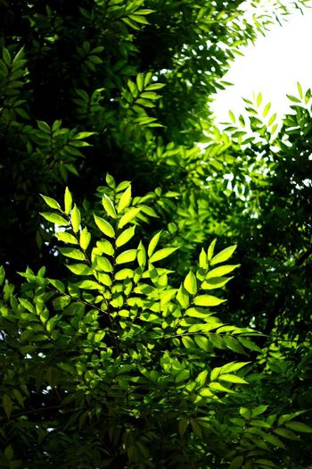 Growth Green Nature Green Color Day Leaf Plant Close-up No People Foliage Tree Beauty In Nature Freshness Outdoors Thank You,❤️ I Always Thinking About U, G I Want To Know Your Secret, C