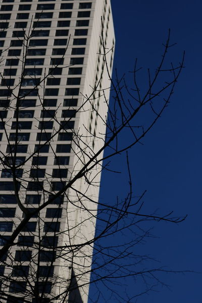 Building Exterior Built Structure Architecture Bare Tree Tree Low Angle View Sky No People Building Branch Nature Plant Office Building Exterior Blue City Day Modern Skyscraper Outdoors Tower